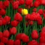 Shihhhh…..Qual flor escolher?!