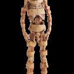 Corpo Humano: Real e Fascinante
