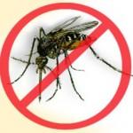Rappa, Afro Samba e Furacão 2000 fazem show contra a dengue