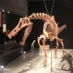 Museu Nacional do Rio abre mostra de dinossauros