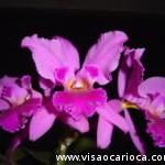 """Exposição """"Orquídeas no Jardim"""" 2012"""