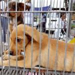 Campanha de adoção de animais em Copacabana