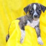 Leroy Merlin promove campanha de adoção de cães e gatos em Jacarepaguá