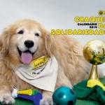 Calendário traz fotos de animais terapeutas inspirados na Copa do Mundo
